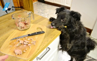 How to Freeze Dry Chicken Dog Treats